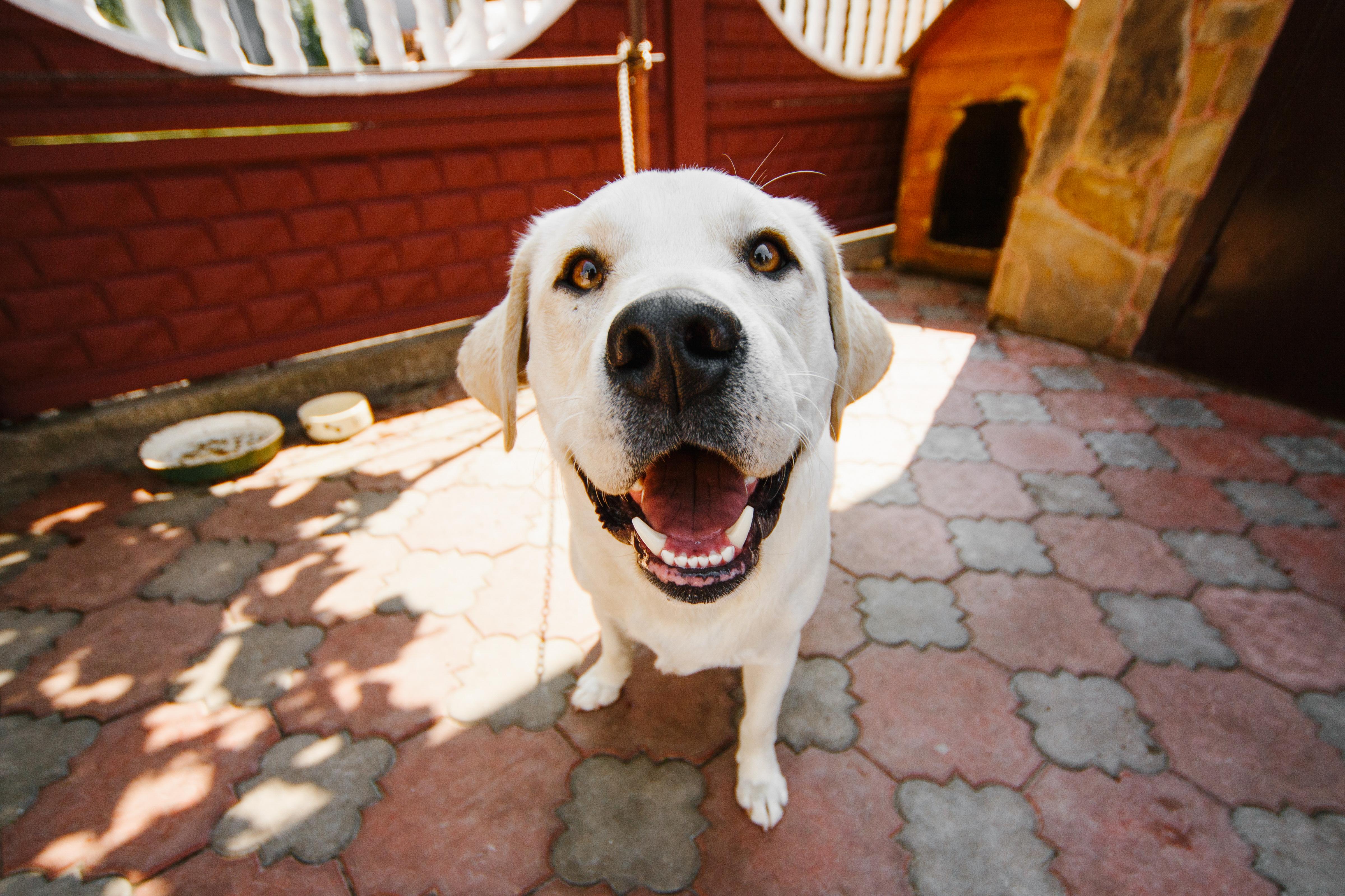 10 lecciones de vida que puedes aprender de un perro