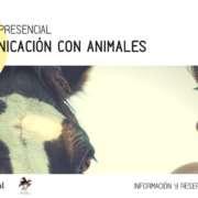Curso de Comunicación animal