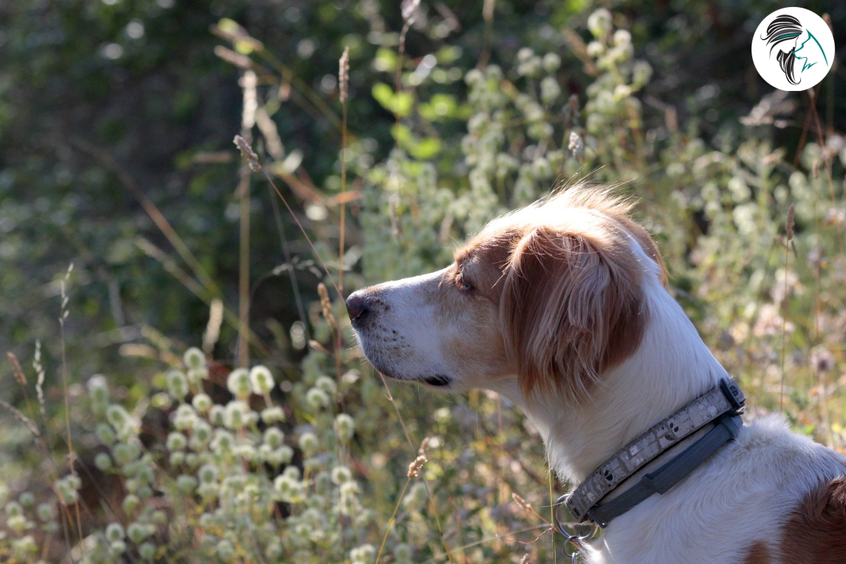 Perra de ayuda comportamiento canino