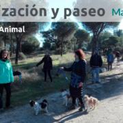 Socialización canina y paseo con perros en Majadahonda
