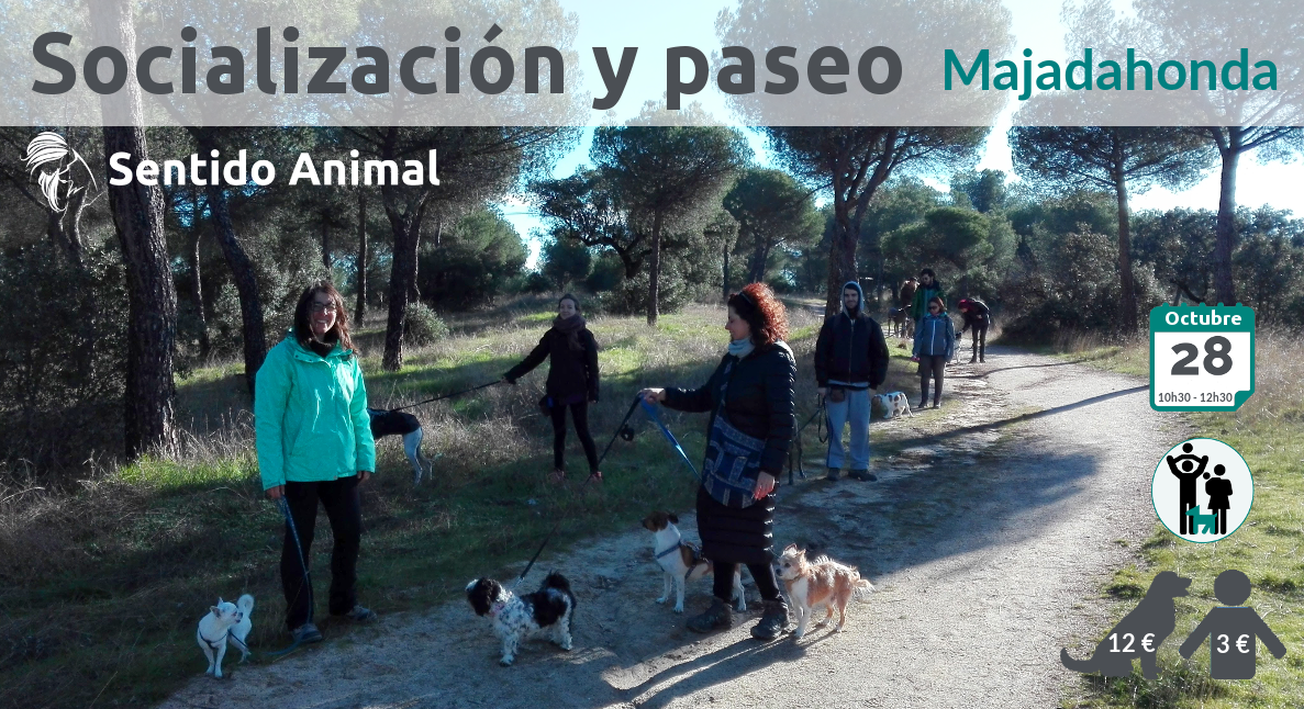 Socialización canina y paseo – octubre 2018