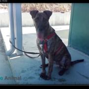 vídeo de comunicacion canina Dulce