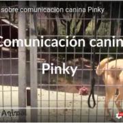 vídeo de comunicacion canina Pinky