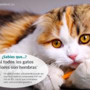 los gatos tricolores son hembras