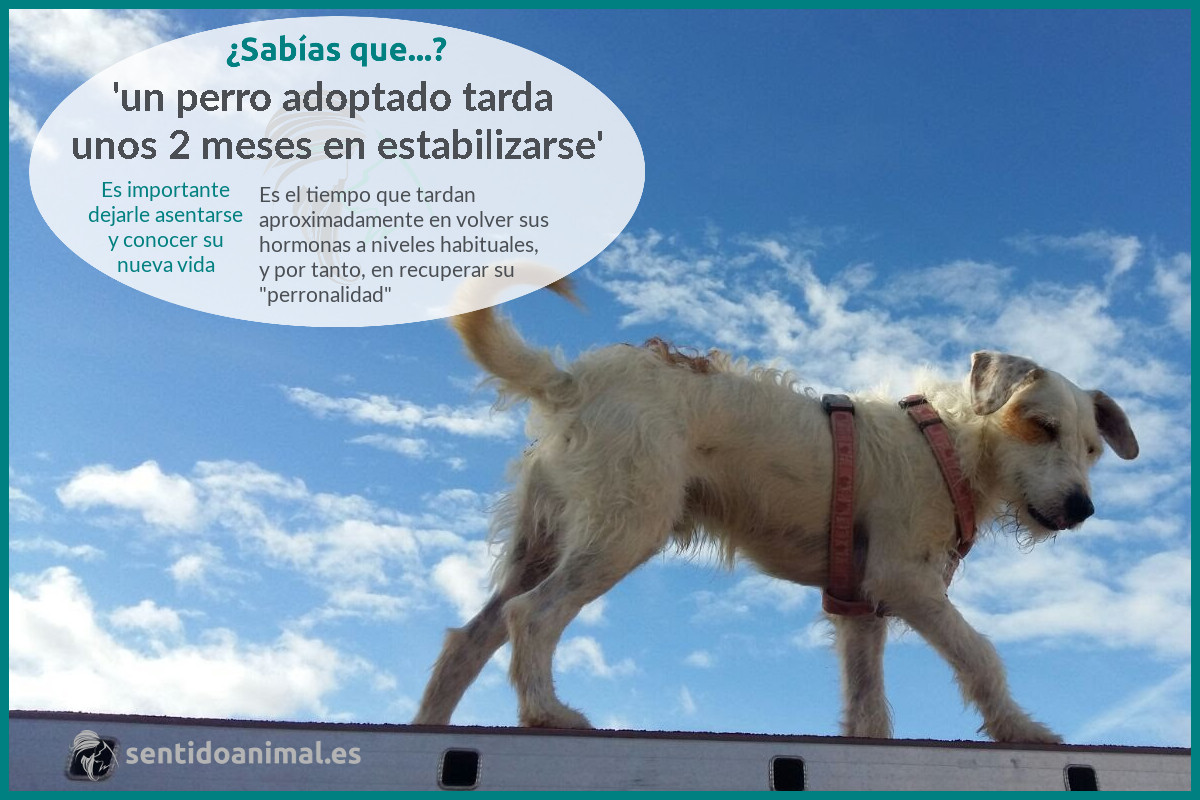 ¿Sabías que un perro adoptado tarda unos 2 meses en estabilizarse?