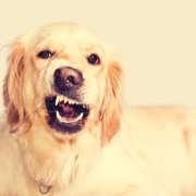 perro con gesto raro