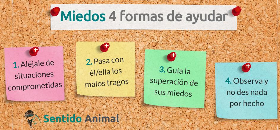 Miedos 4 formas de ayudara tu perro con miedos